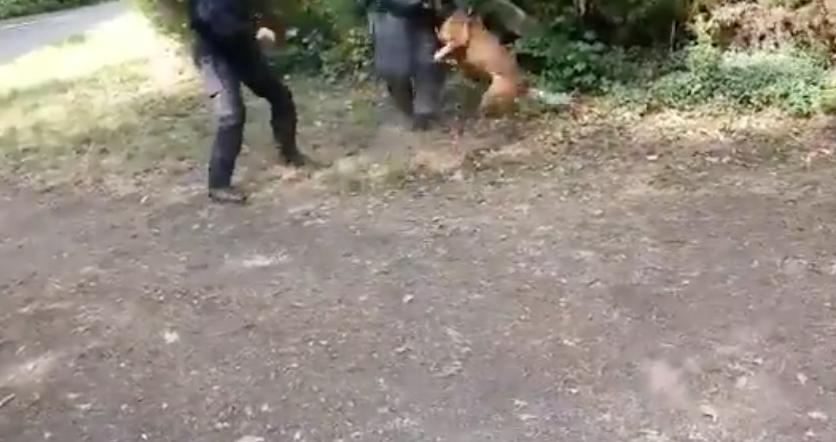 Hundeführer haben auf einen Hund eingeprügelt